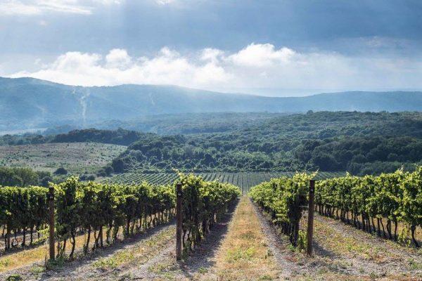 Винный туризм – как выбрать лучший тур?